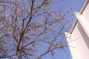 冬花.jpg